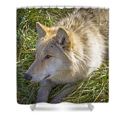 Sun Soak Shower Curtain