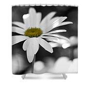 Sun-speckled Daisy Shower Curtain