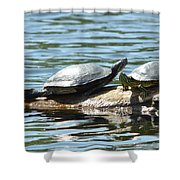 Sun Stretching Turtle And Youngster Shower Curtain