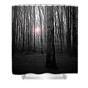 Sun Thru The Trees At Twilight Shower Curtain