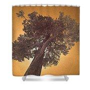 Sun Tree Shower Curtain