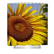 Sun Worshipper Shower Curtain