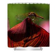 Sunbathing Dragonfly Shower Curtain