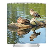 Sunbathing Mallards Reflecting Shower Curtain