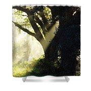 Sunbeam Tree Shower Curtain