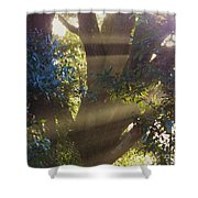 Sunbeams In The Tree Shower Curtain
