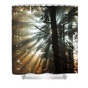 Sunbeams Through Trees Shower Curtain