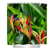 Sunbird On Heliconia Ginger Flowers Singapore Shower Curtain