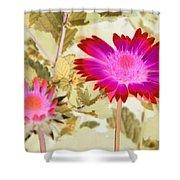 Sunburst - Photopower 2251 Shower Curtain