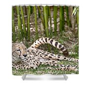 Sunday Afternoon Lazing  Shower Curtain