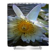 Sundown At Lotus Pond Shower Curtain