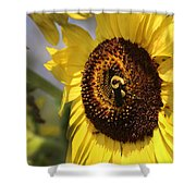 Sunflower And Bee-3922 Shower Curtain