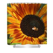 Sunflower And Bee-4041 Shower Curtain