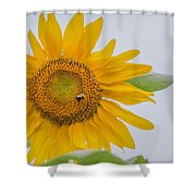 Sunflower And Bee Shower Curtain