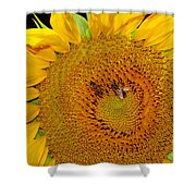 Sunflower And Bees Shower Curtain