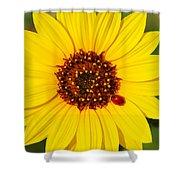 Sunflower And Ladybird Beetle 2am-110490 Shower Curtain
