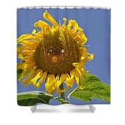 Sunflower At Latrun Shower Curtain
