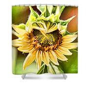 Sunflower Beauty - Painterly Shower Curtain