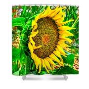 Sunflower Bloom Shower Curtain