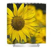 Sunflower Blossom Shower Curtain