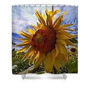 Sunflower Blue Shower Curtain by Debra and Dave Vanderlaan
