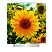 Sunflower Centered Shower Curtain