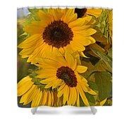 Sunflower Cluster Shower Curtain