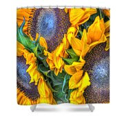 Sunflower Delight Shower Curtain