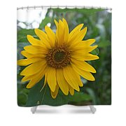 Sunflower Directly... Shower Curtain
