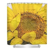 Sunflower Drying Up Shower Curtain