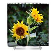 Sunflower Duo Shower Curtain