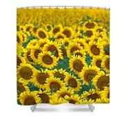 Sunflower Explosion Shower Curtain