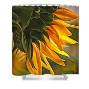 Sunflower Farm 1 Shower Curtain