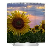 Sunflower Field Shower Curtain by Debra and Dave Vanderlaan