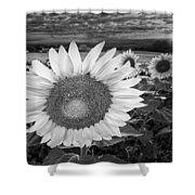 Sunflower Field Forever Bw Shower Curtain