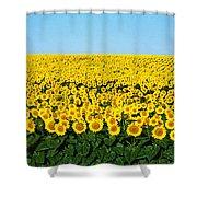 Sunflower Field, North Dakota, Usa Shower Curtain