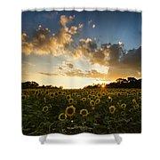 Sunflower Field Sunset Shower Curtain