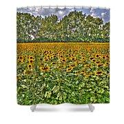 Sunflower Fields Ford World Headquarters Dearborn Mi Shower Curtain