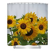 Sunflower Group Shower Curtain