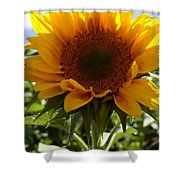 Sunflower Highlight Shower Curtain