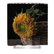 Sunflower In A Basket Shower Curtain