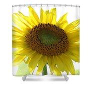 Sunflower In Light Shower Curtain
