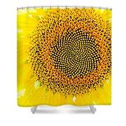 Sunflower In The Summer Sun Shower Curtain