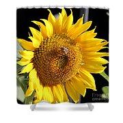 Sunflower-jp2437 Shower Curtain
