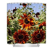 Sunflower Layers Shower Curtain by Kerri Mortenson