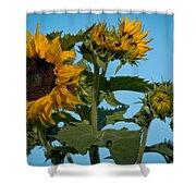 Sunflower Morning Shower Curtain