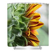 Sunflower Named The Joker Shower Curtain