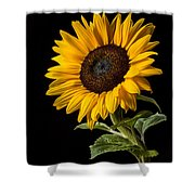 Sunflower Number 2 Shower Curtain