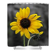 Sunflower On Gray Shower Curtain