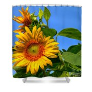 Sunflower Pair Shower Curtain